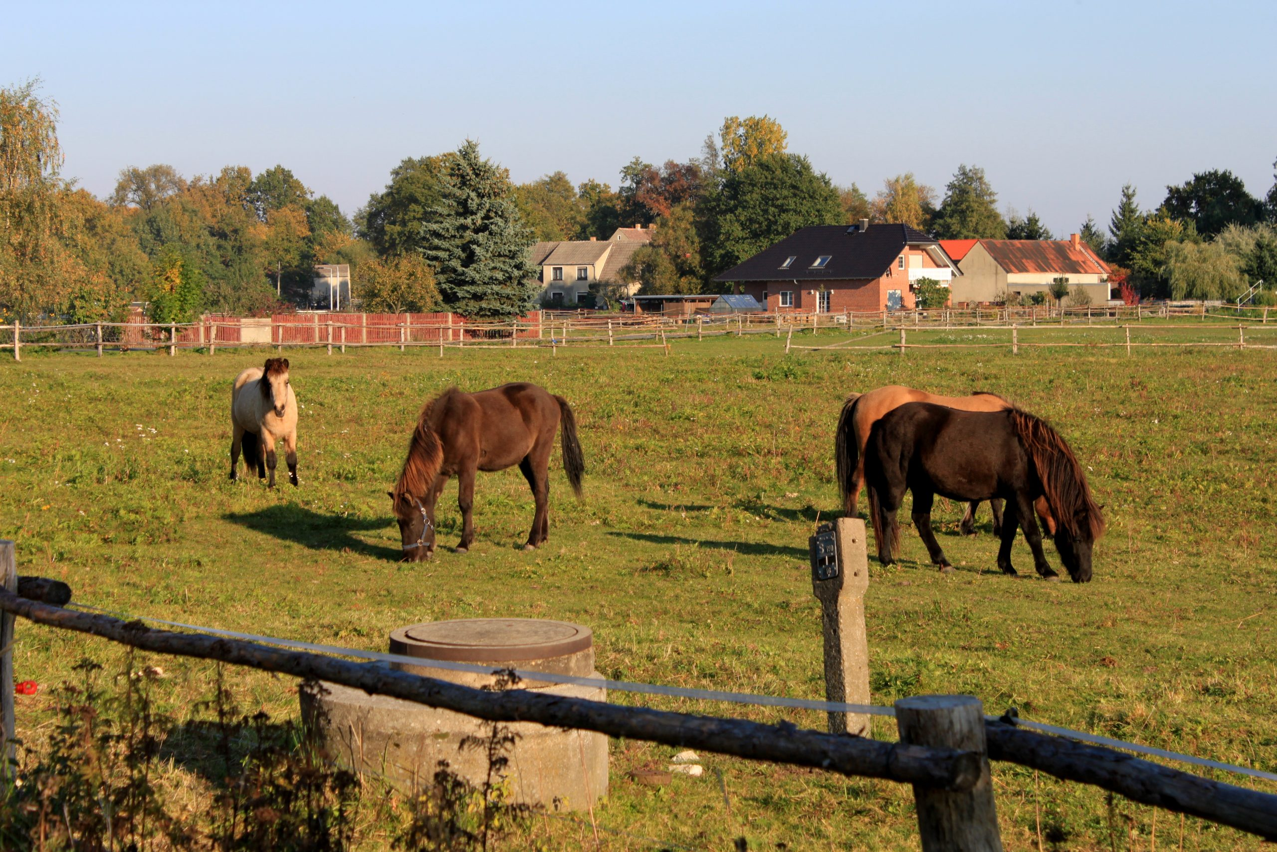 Centered Riding® Open-Kurs, DE- 04932 Röderland